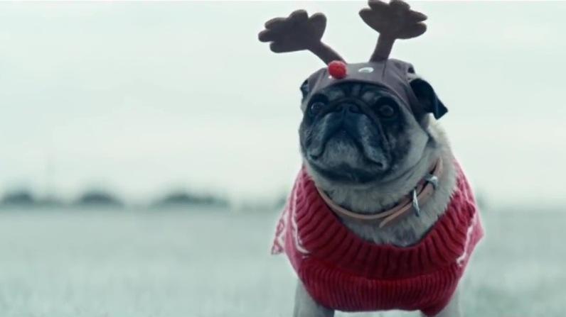 sc-asda-christmas-dogs-1