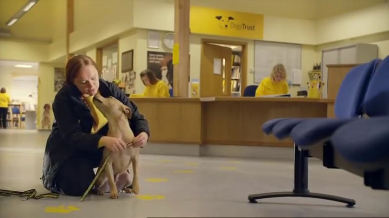 sc-dogs-trust-trained-for-love-1