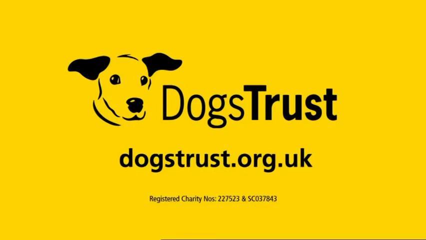 sc-dogs-trust-trained-for-love-3