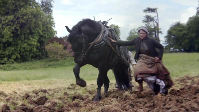 sc-lloyds-bank-horse-story-1