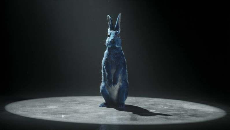 sc-o2-follow-rabbit-2